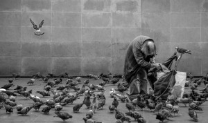 Weller-Claes-the bird friend groot